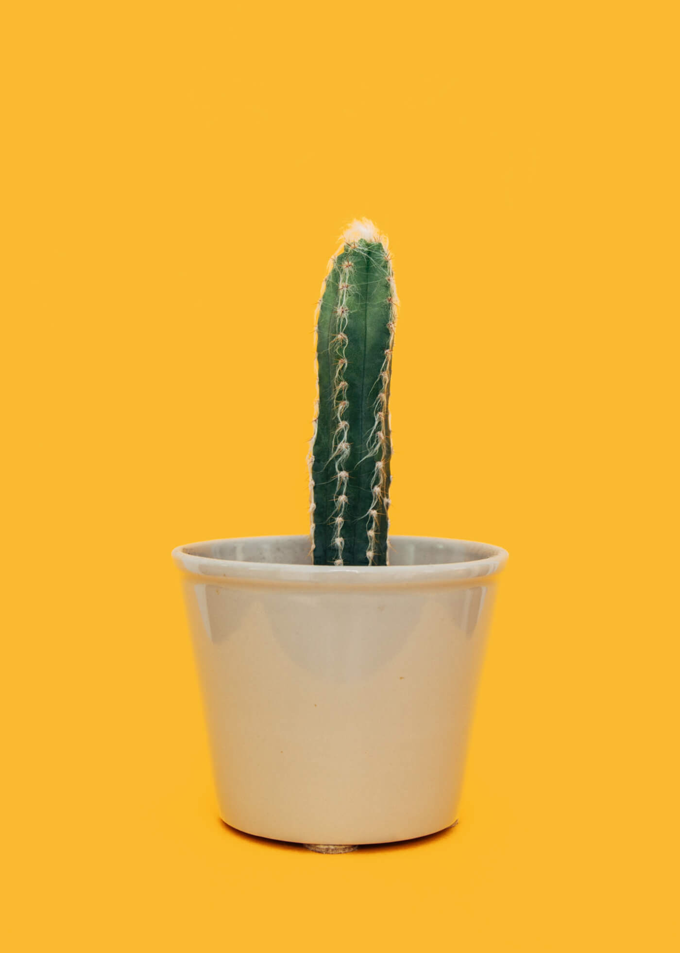 a photo of a cactus in a pot on a yellow background