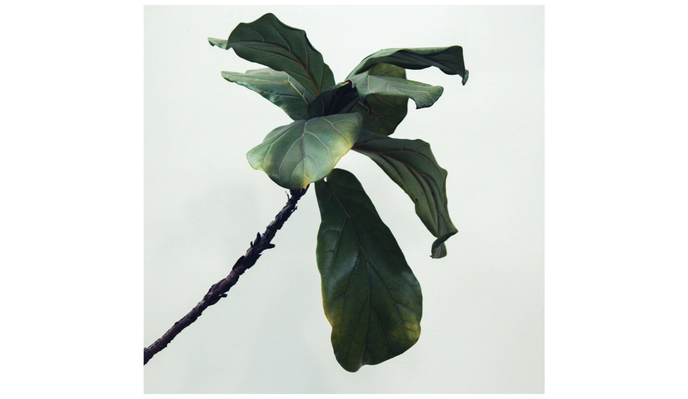 a stem of a plant